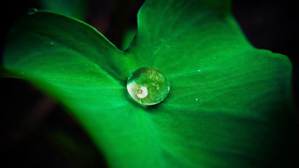 Hydrophobic lotus leaf